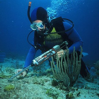 How Much Do Marine Biologists Make? - Marine Biologist Salary