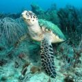 What do turtles eat? Turtle swimming in the ocean