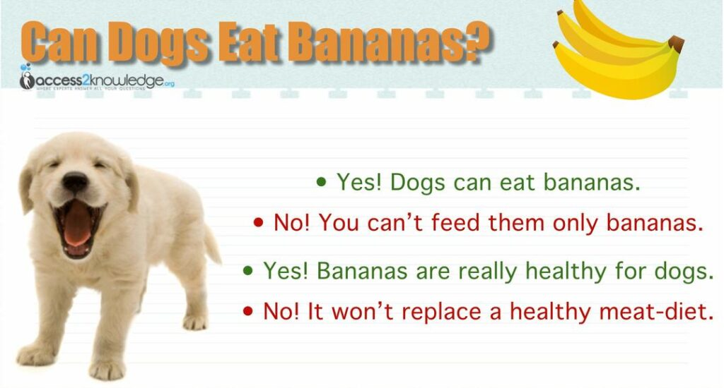 """can dogs eat bananas infographic can dogs eat banana chips can dogs eat banana peels can my dog eat bananas infographic"""