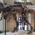 dinosaur facts largest T. Rex skeleton ever found
