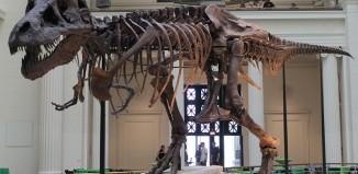 dinosaur facts largest T. Rex skeleton ever found