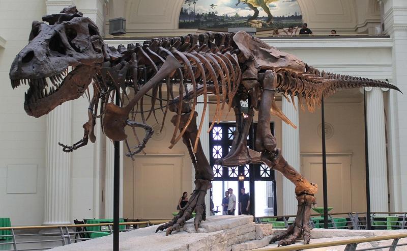 largest Tyrannosaurus rex skeleton dinosaur facts
