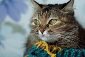 cat in wool scarf