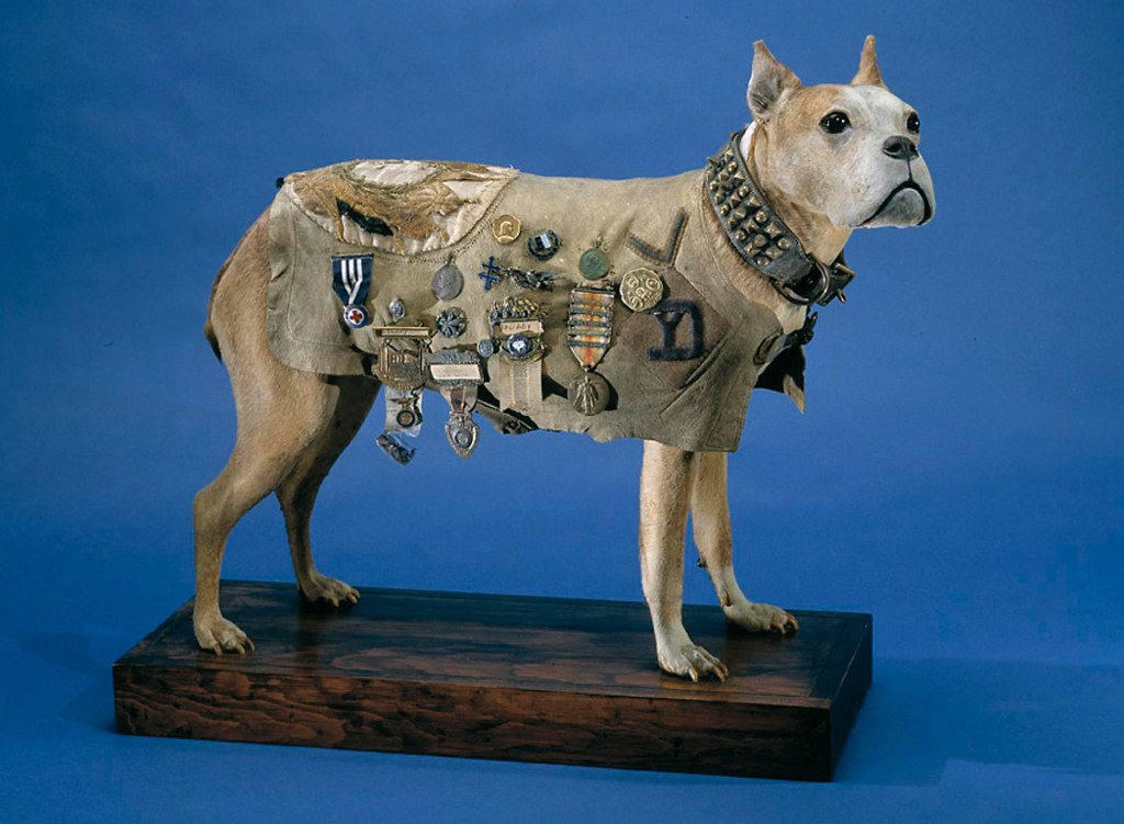 what is the highest military rank achieved by a dog