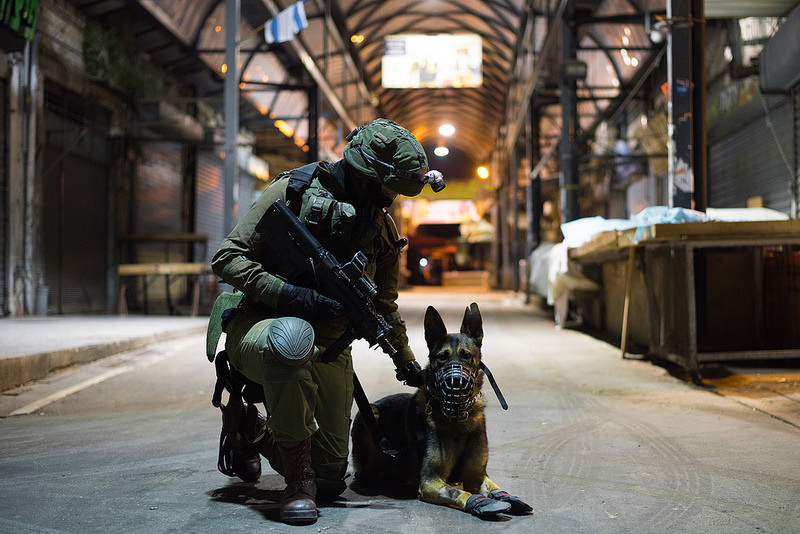a military veteran and a canine